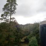木々に囲まれた環境